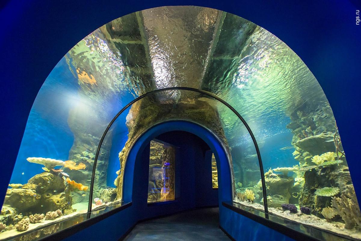 https://proehal.ru/media/sights/novosibirsk/centr-okeanografii-i-morskoj-biologii-delfiniya_06.jpg